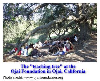 The Teaching Tree